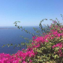 Bougainvillea-And-Sea