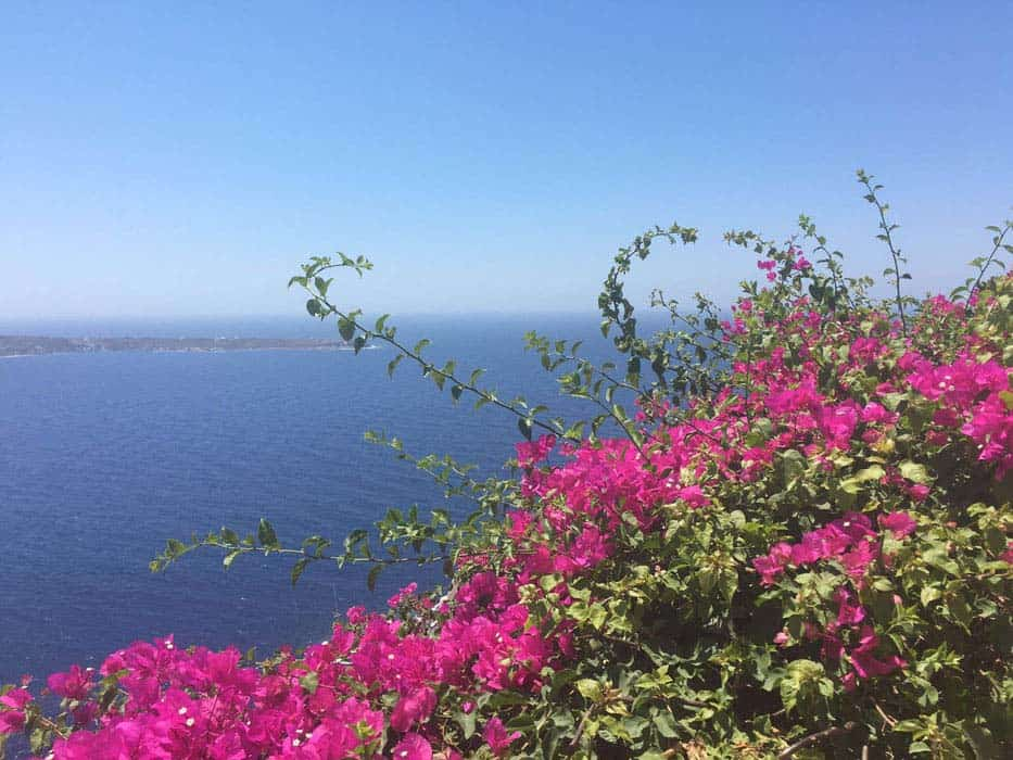 Bougainvillea-And-Sea
