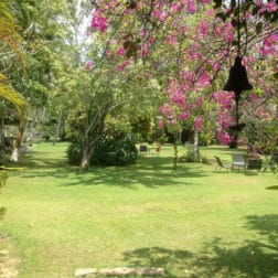 view from doctors house veranda to the grounds sri lanka sunshine and yoga holiday