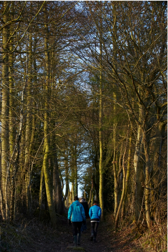 walking through the woods new year yoga retreat brecon beacons wales