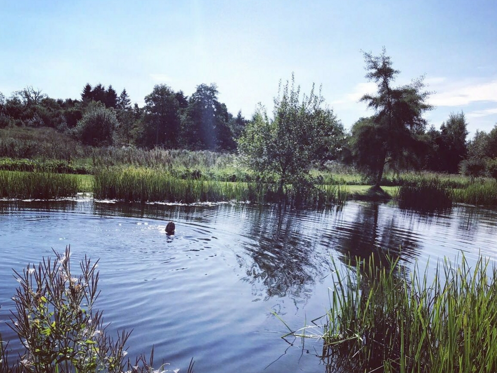 wild swimming lake with person swimming norfolk - august bank holiday yoga retreat