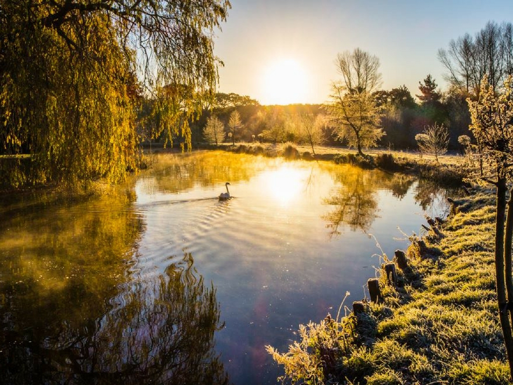 View of lake with swan in autumn norfolk yoga retreat
