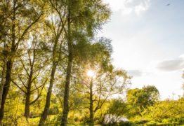 sun bursting through trees norfolk
