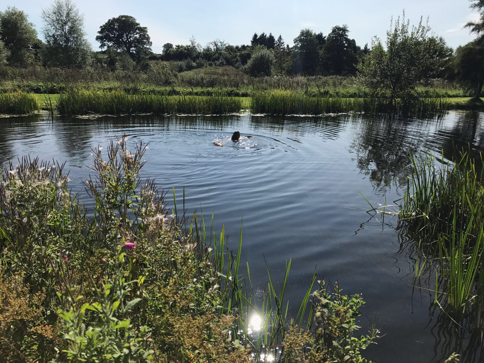girl wild swimming in lake norfolk yoga retreat