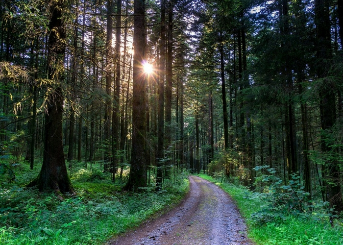 be in nature 7 ways towards zero waste trees, path sun
