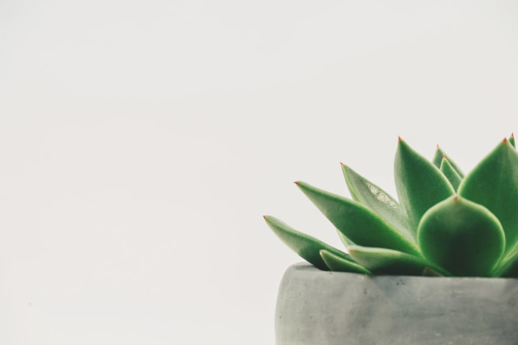 a cactus in corner of image blank background