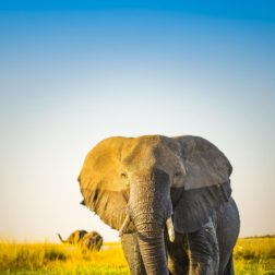 bull elephant safari and yoga holiday