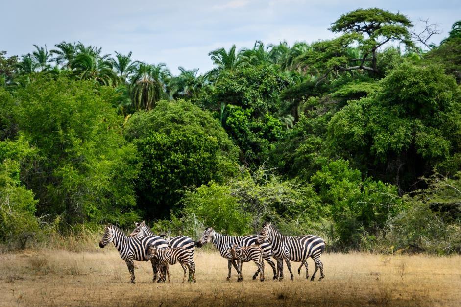 yoga safari botswana