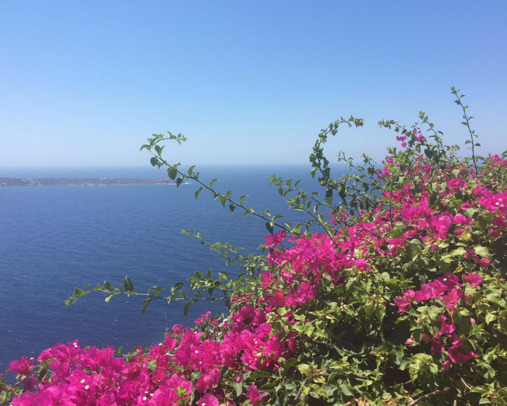 Pink bougainvillea with sea in background