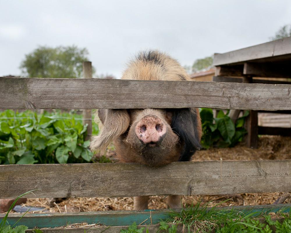 pig-snout-wellness-yoga-retreat-oxfordshire