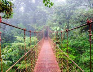 swing bridge in rainforest canopy - yoga holiday costa rica