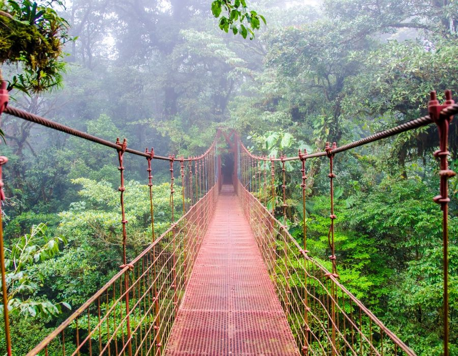 swing bridge in rainforest canopy - yoga holiday costa rica