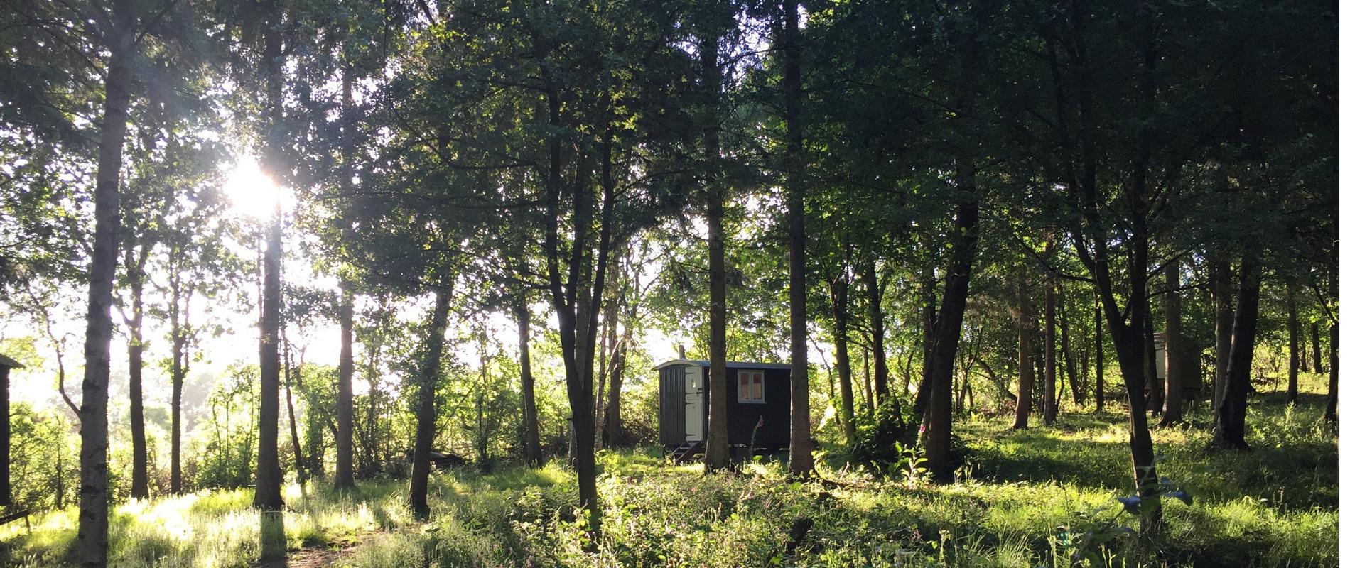 shepherds hut in woodland with dappled sunlight